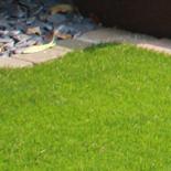 Artificial Grass6
